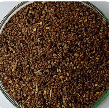 SEMENTES NABO FORRAGEIRO - CAIXA COM 2,0 KG