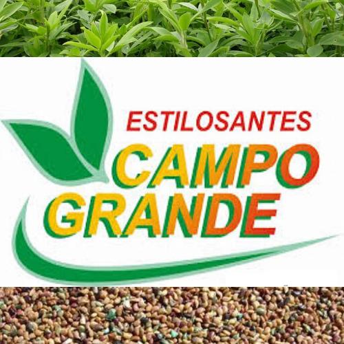Semente de Stylosante Campo Grande - 1 kg