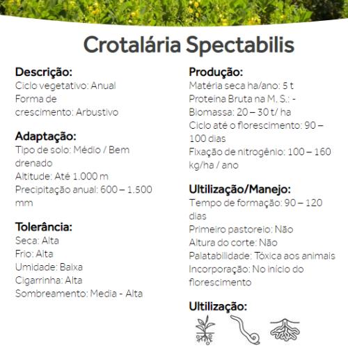 Semente de Crotalária Spectabilis - Preço por KG