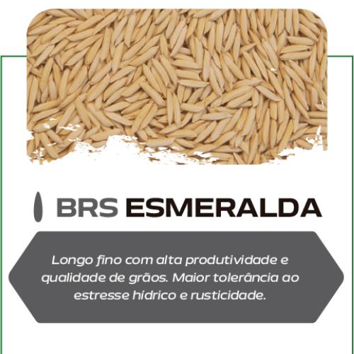 Semente de Arroz Esmeralda - Saco de 40 kg