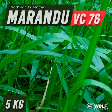 Semente de BRACHIARIA BRIZANTHA CV MARANDU (76% VC) - Saco de 5 kg