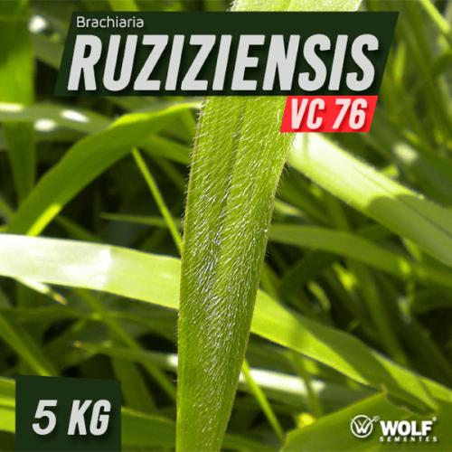 Semente de BRACHIARIA RUZIZIENSIS CV BRACHIARIA RUZIZIENSIS (76% VC) - Saco de 5 kg