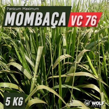 Semente de PANICUM MAXIMUM CV MOMBAÇA (76% VC) - Saco de 5 kg