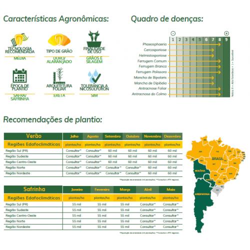 Milho Boliviano AGRI 104 - Preço 60.000 sementes