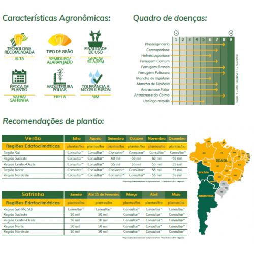 Milho Boliviano AGRI 340 - Preço 55.000 sementes